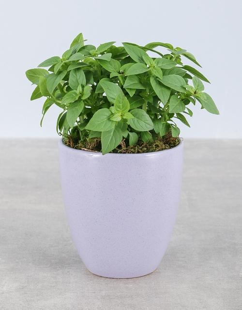 flowers: Basil Herbs in Glazed Pot!