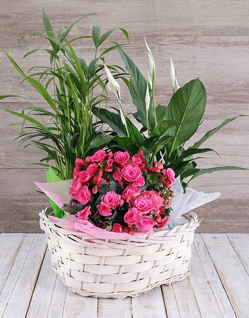 colour: Begonia Jungle Basket!