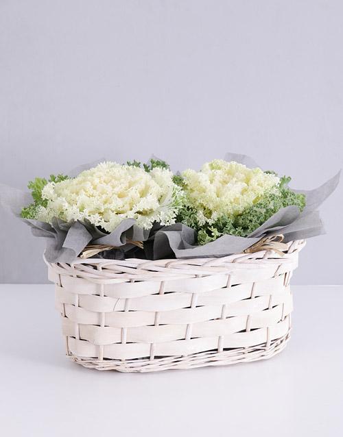 plants: Double White Kale Plant Basket!