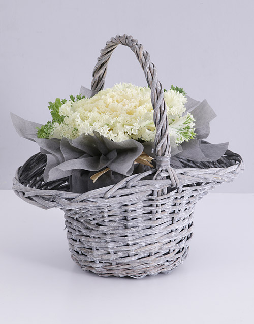 colour: White Kale Plant in Willow Basket!