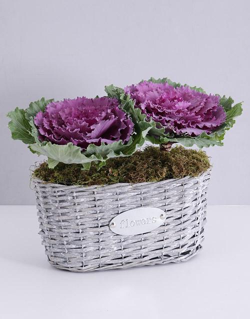 basket: Double Purple Kale Plant Basket!