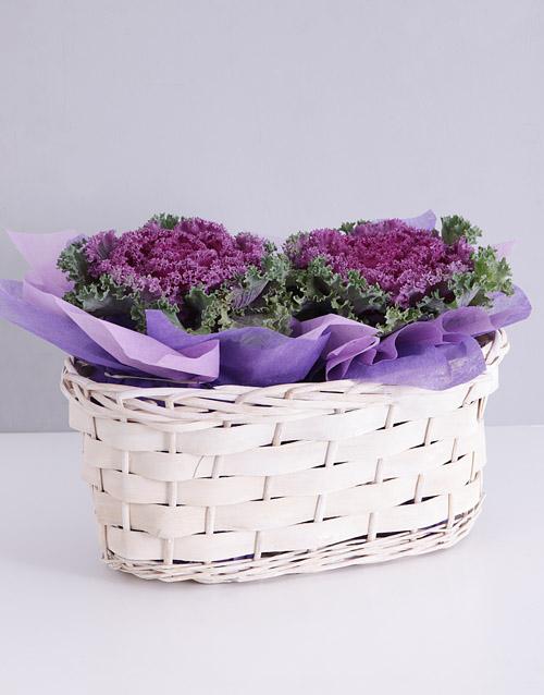 basket: Purple Kale Plant Duo in White Basket!
