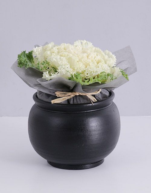 prices: Kale Plant in Black Pottery!