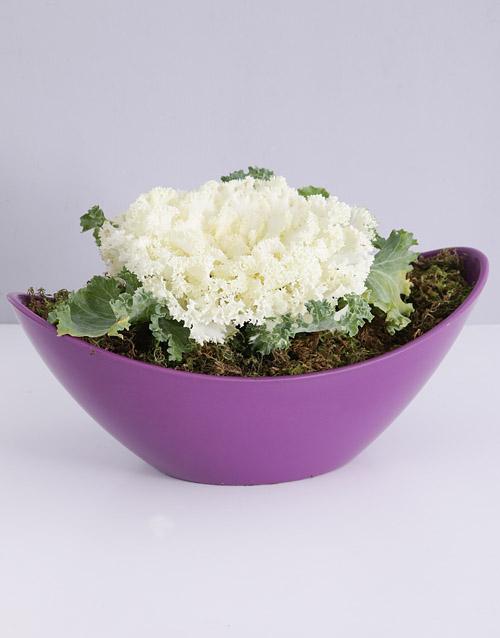 colour: Kale Plant in Purple Boat Vase!