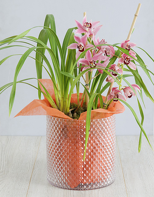 birthday: Cymbidium Orchid in Cylinder Vase!