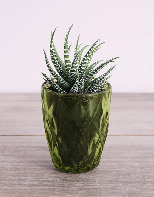 coloured-vases: Desert Arrangement in Green Votive!
