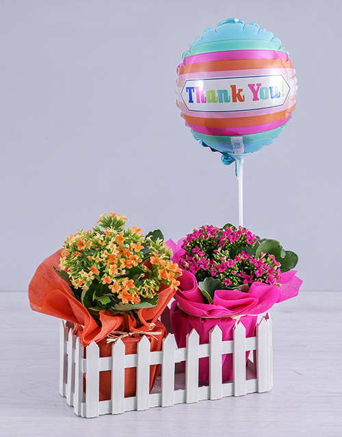 prices: Kalanchoe Plants and Thank You Balloon in Fence!