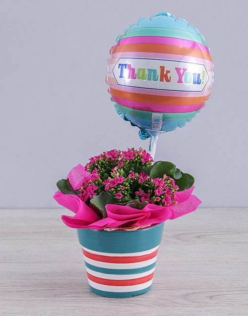 pottery: Cerise Kalanchoe Plant and Thank You Balloon Gift!