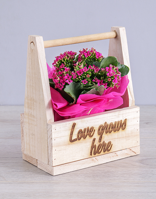 flowering: Love Grows Here Kalanchoe Crate!
