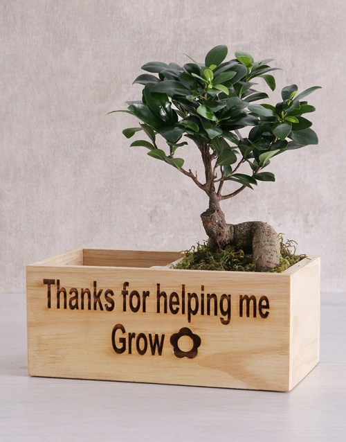 green: Thanks for Helping Me Grow Ficus Bonsai Tree !