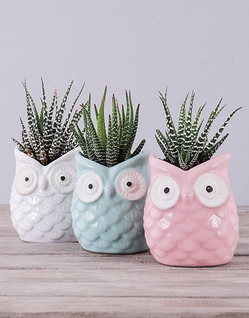 pottery: Ceramic Owl with Succulent!