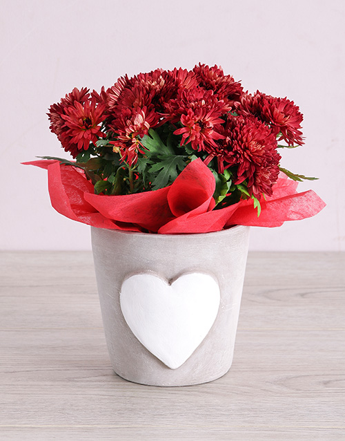 love-and-romance: Maroon Chrysanthemum in Heart Pottery!