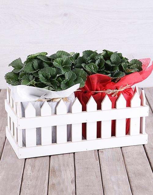birthday: Strawberry Plants in Picket Fence!