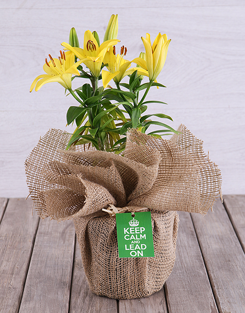 prices: Keep Calm Potted Yellow Asiatic Lily!
