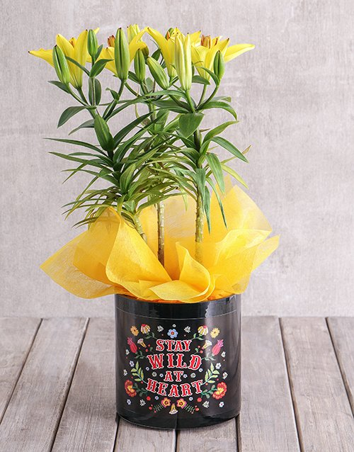 prices: Asiatic Lily in Stay Wild Vase!