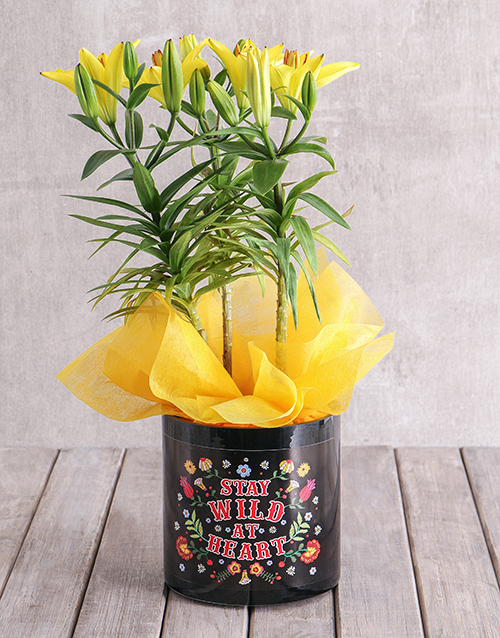lily: Asiatic Lily in Stay Wild Vase!