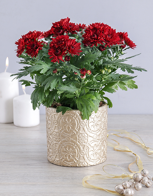 christmas: Maroon Chrysanthemum Pot!