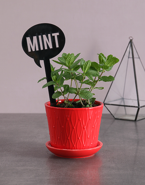 fathers-day: Herb Plant in Red Pot !
