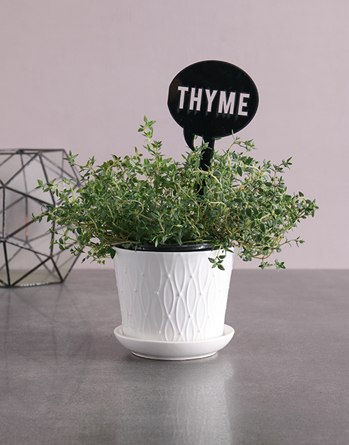 herbs: Herb Plant in White Pot!