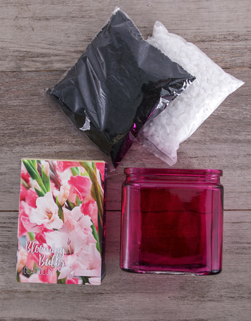 plants: Grow Your Own Gladiolus Flower Kit!
