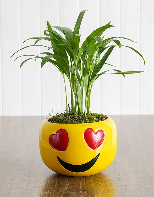 plants: Love Palm in Heart Eyes Emoji Pot!
