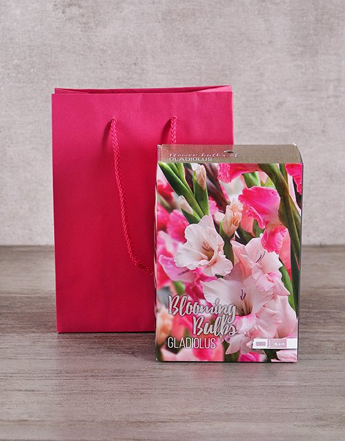 colour: Gladiolus Bulbs in Cerise Bag!