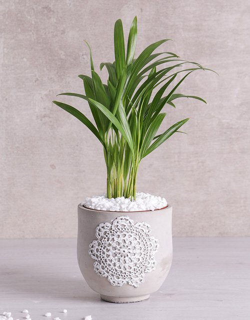 whats-new: Love Palm in Grey Patterned Vase!