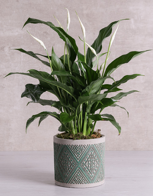 lilies: Spathiphyllum in Green Patterned Vase!