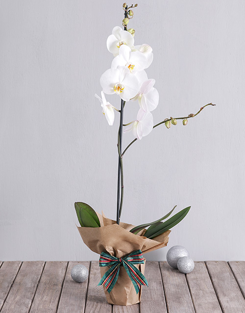 colour: White Phalaenopsis Orchid in Craft Paper!