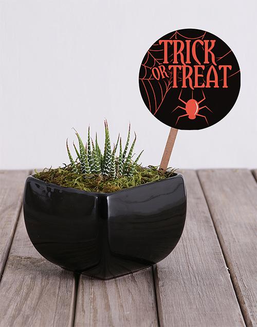 flowers: Trick or Treat Cactus in Black Vase!