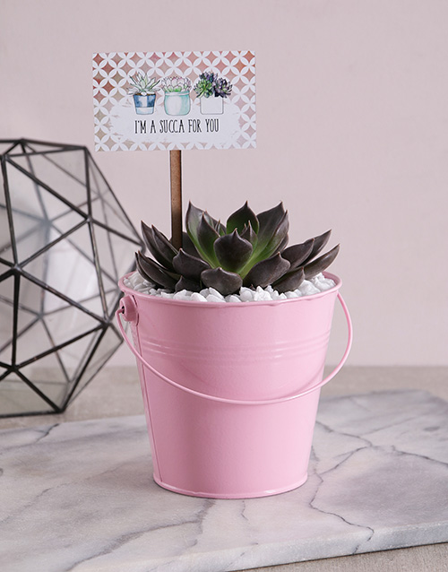 flowers: Succa For You Pink Succulent Bucket!