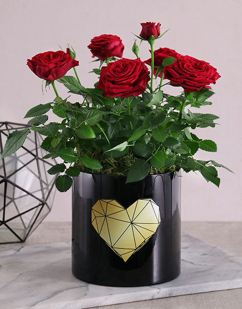 vase: Golden Heart Potted Rose Bush!