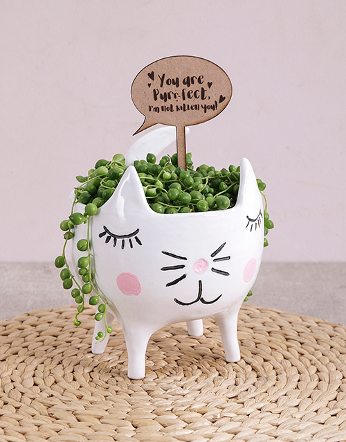 anniversary: String of Pearls Plant in Cat Pot!