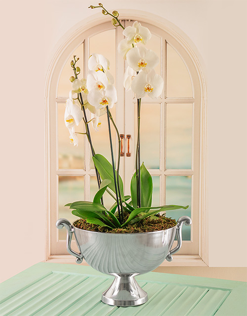 anniversary: Orchids in Silver Bowl!