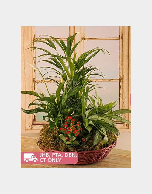 basket: Green Leafy Plants in a Woven Wicker Basket!