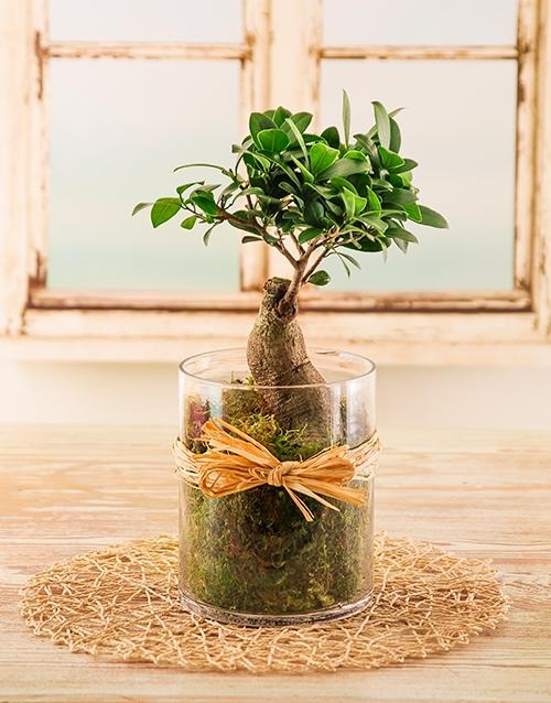 bonsai: Bonsai Tree in a Cylinder Vase!