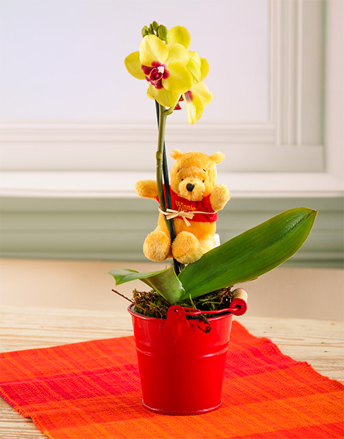 plants: Winnie the Pooh and Mini Orchid!