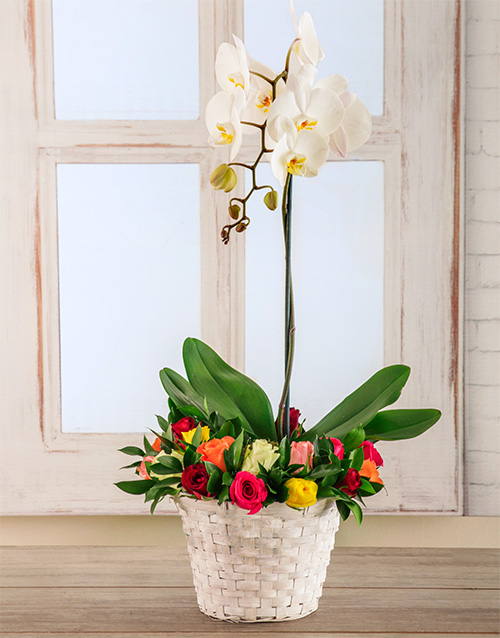 orchids: A Beautiful Spring Basket!