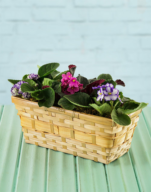 easter: African Violets in a Basket!