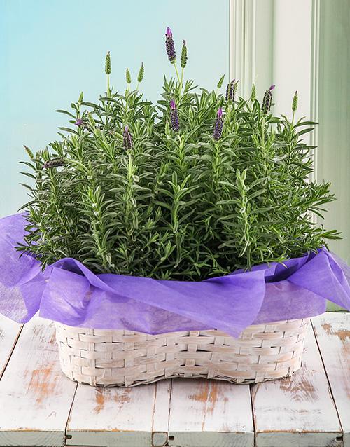 basket: Lavender Love Arrangement!