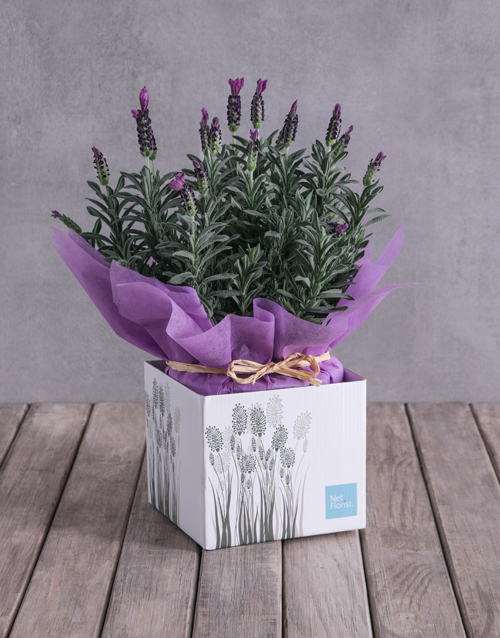 in-a-box: Lovely Lavender Box!