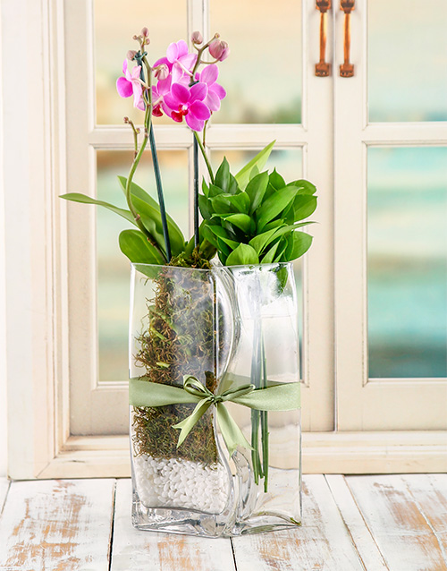 orchids: Lovers Orchid Vase!