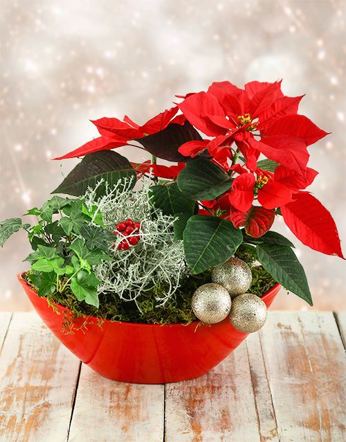 colour: Christmas Poinsettia Boat!