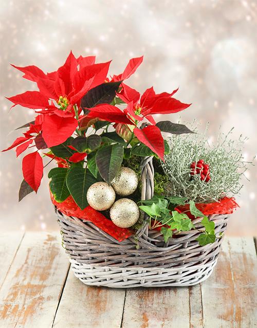 basket: Festive Poinsettia Basket!