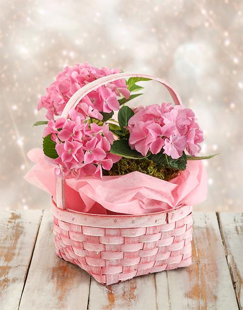 basket: Pink Bliss Hydrangea Basket!