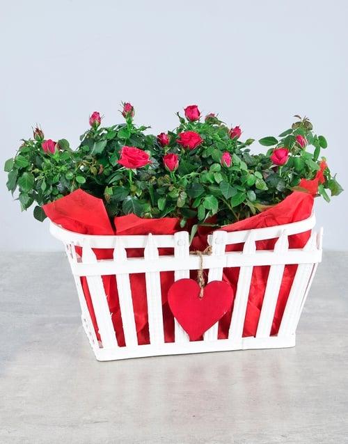 anniversary: Box of Love Rose Box!