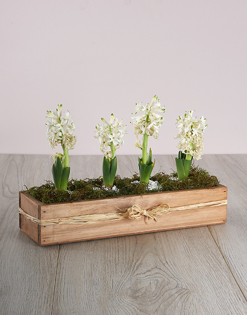 anniversary: Hyacinths in a Wooden Crate!