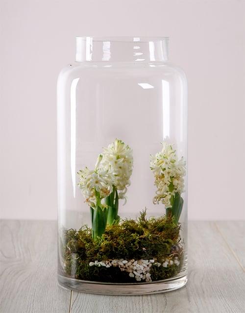 sympathy: White Hyacinths in a Terrerium Vase!