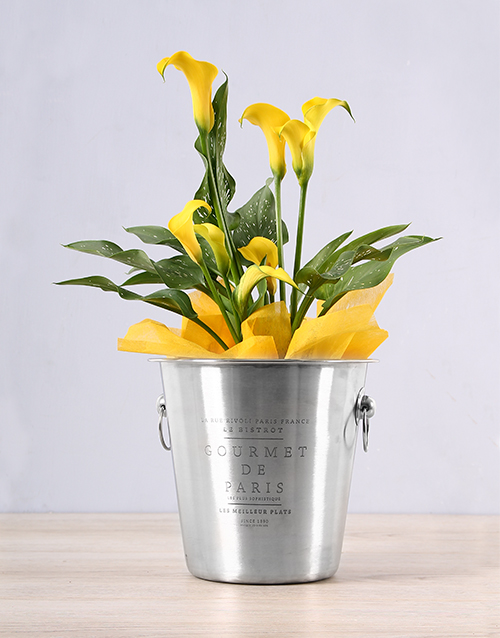 lilies: Yellow Zantedeschia Ice Bucket!
