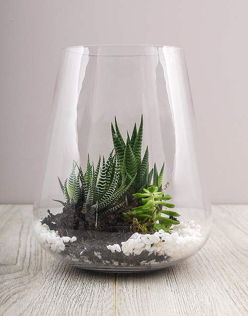 grandparents-day: Cacti and Succulents in Tall Vase!